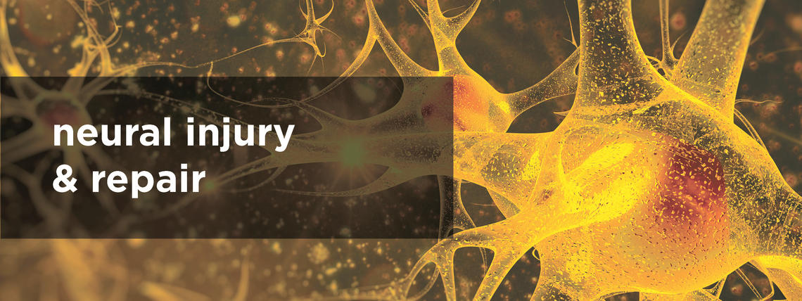 neural injury and repair
